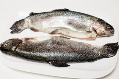 2 trouts on a plate